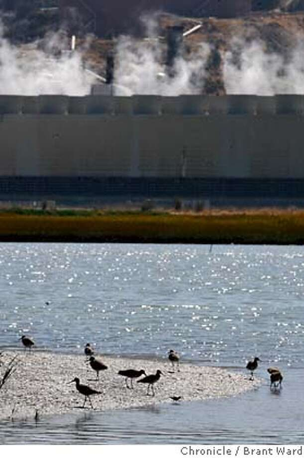 port108.jpg  While shorebirds bask on a sunny mudflat in the marsh, cooling towers of the Chevron refinery, in background, release water vapor into the air. Opponents of the expansion idea point out that the area between the birds and the refinery would have to be dredged significantly. The Port of Richmond is thinking about expanding into a secluded wetland north of the Richmond Bridge next to the huge Chevron plant. The marsh there is called Wildcat Creek Marsh.{Brant Ward/The Chronicle} 9/18/06 MANDATORY CREDIT FOR PHOTOGRAPHER AND SAN FRANCISCO CHRONICLE/ -MAGS OUT Photo: Brant Ward