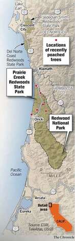 Redwood Forests. Chronicle Graphic