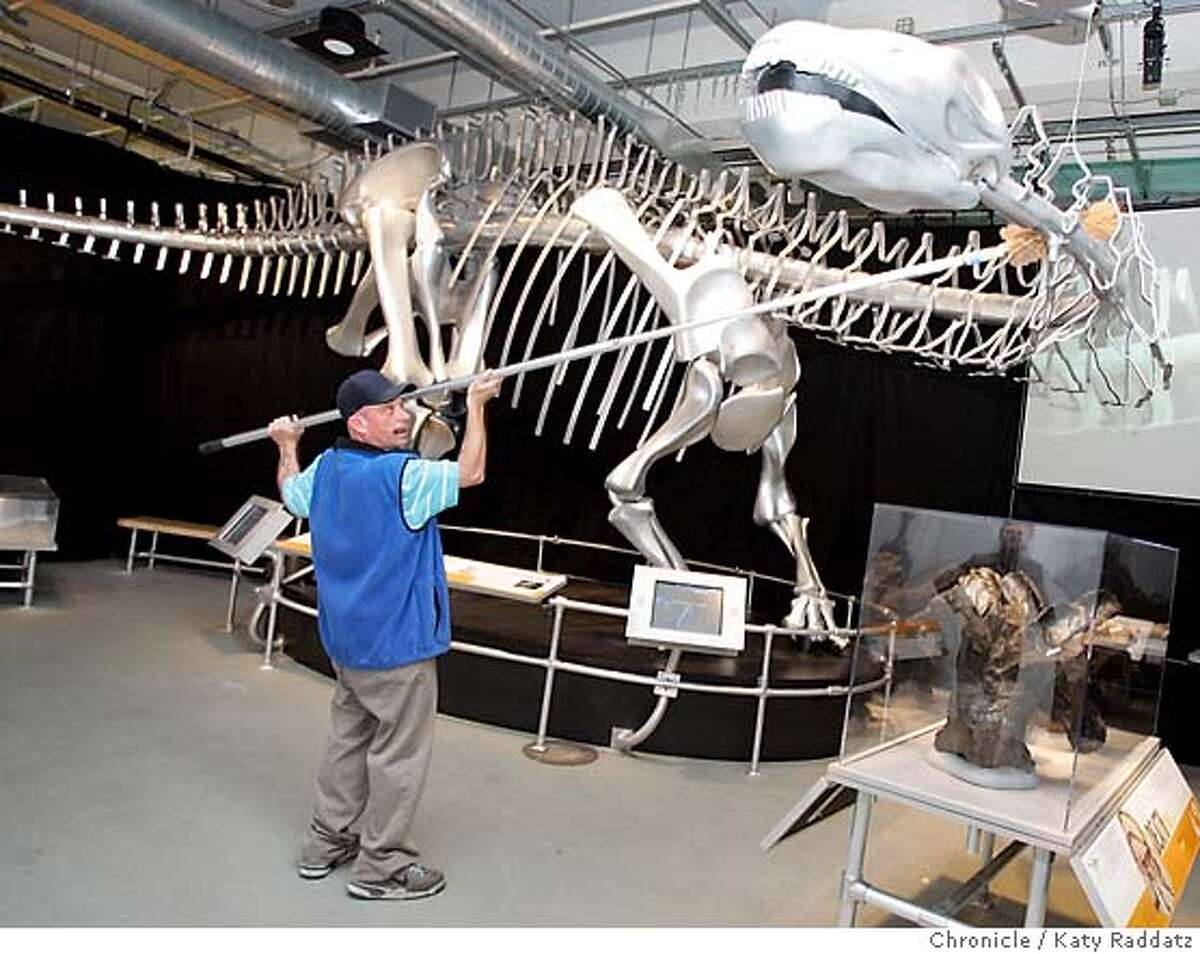 DINOSAURS15_044_RAD.jpg SHOWN: Cliff Valasco is the custodial supervisor, and he personally dusts the metal skeleton of an apatosaurus. The California Academy of Sciences is opening a major dinosaur exhibit on Saturday, Sept. 16, 2006, in their location at 875 Howard St. in San Francisco. These photos were made on Thursday, Sept. 14, 2006, in San Francisco, CA. (Katy Raddatz/The S.F.Chronicle) **Cliff Valasco, apatosaurus Mandatory credit for photographer and the San Francisco Chronicle/ -Mags out