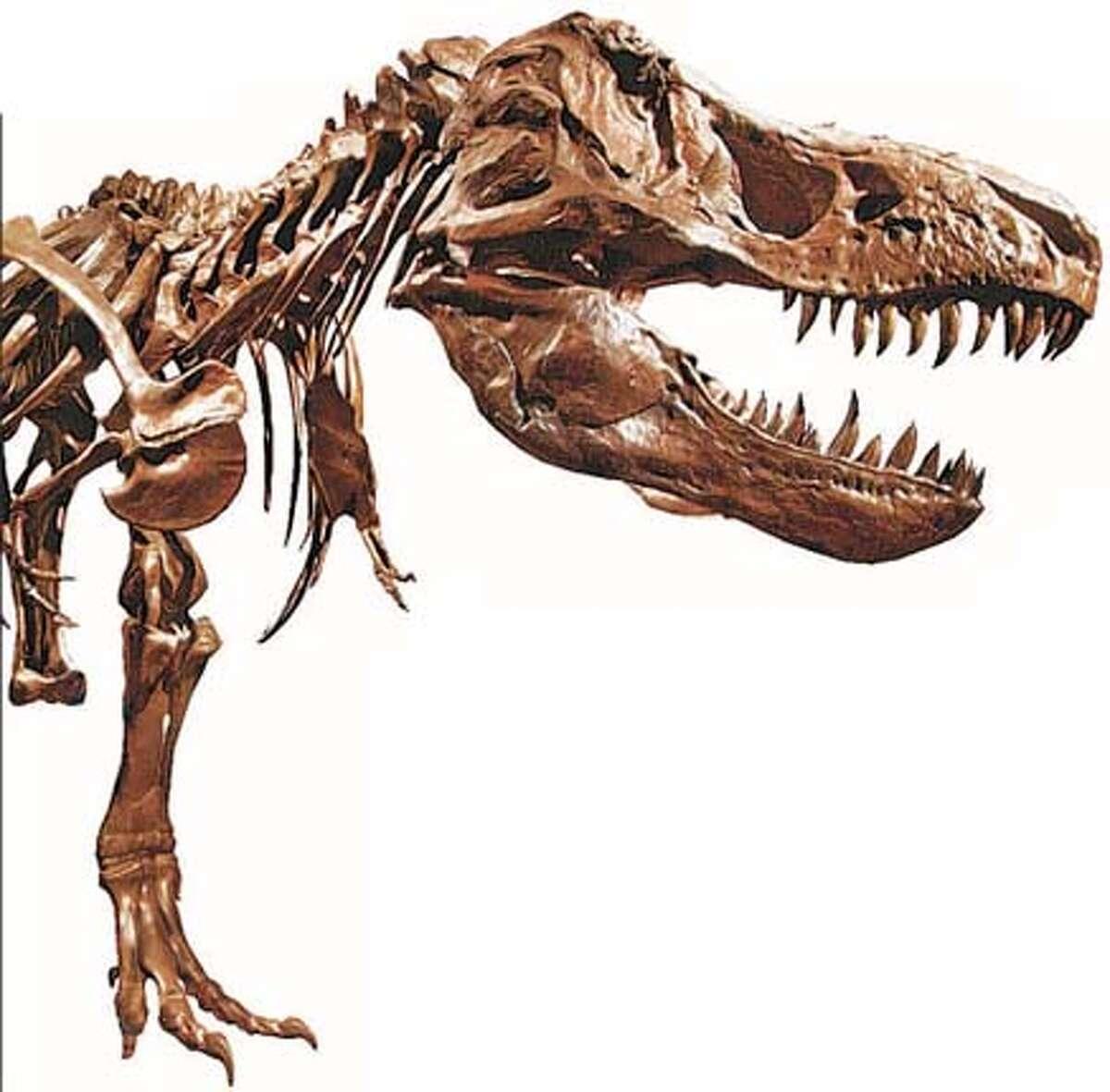 Dinosaurs on Display: