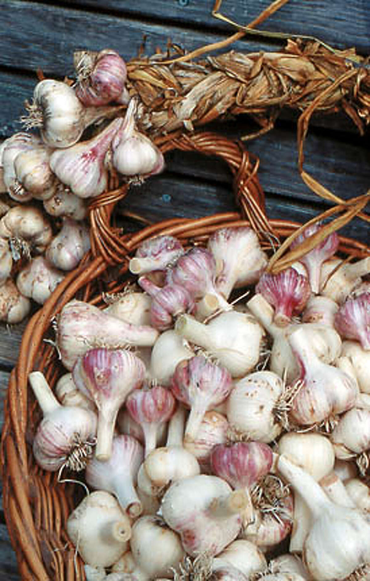 The softneck variety is the most common type of garlic.