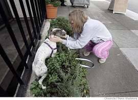 Alicia Parlette takes her new dog Clarabelle on a crisp morning walk near her home. But Clarabelle who is frighten of most things, suddenly cowers in the bushes. Alicia attemps to calm her. Event on 9/7/06 in San Francisco.  Penni Gladstone / The Chronicle MANDATORY CREDIT FOR PHOTOG AND SF CHRONICLE/ -MAGS OUT