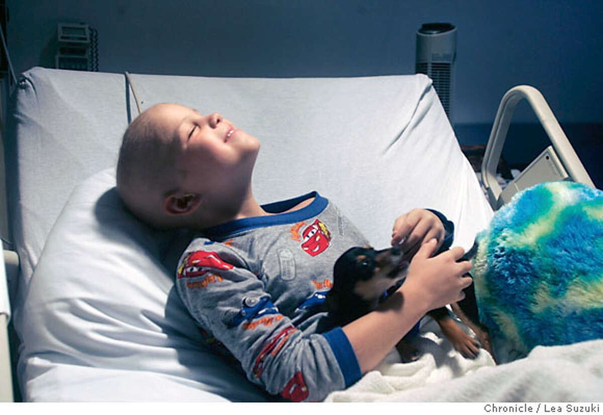 Kyle Wetle, 8, is reunited with Chemo, his Chihuahua puppy in his hospital room at UCSF Children's Hospital on Wednesday, September 6, 2006. Photo by Lea Suzuki/The San Francisco Chronicle Photo taken on 9/6/06, in San Francisco, CA. **(themselves) cq.