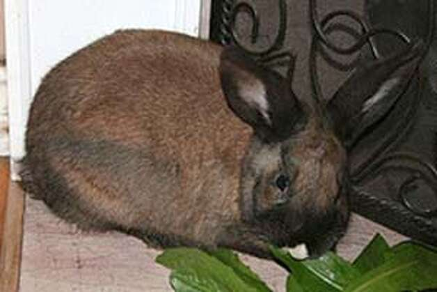 "Rabbits are wonderful ""green"" pets. They're vegetarians, eat  green kitchen scraps, and their used litter can be safely and easily  composted. Photo courtesy Gina Spadafori."