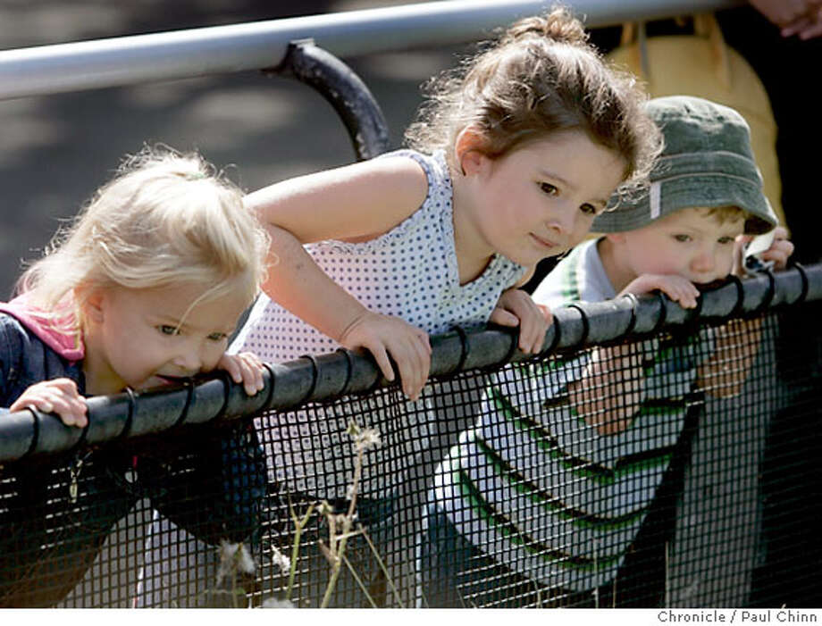 "From left, Ella Nelson, 2, Mia Nelson, 4, and Miles Scherer, 2, take a closer look at the newest penguins at the annual ""March of the Penguins"" at the San Francisco Zoo in San Francisco, Calif. on Thursday, August 31, 2006. Six penguin chicks hatched in late Spring were taken to the zoo's Avian Conservation Center where they were hand-reared by zookeepers. After learning how to swim and east fish fed to them by hand the six adolescent penguins waddled back to Penguin Island where they rejoined the rest of the penguin colony.  PAUL CHINN/The Chronicle  **Ella Nelson, Mia Nelson, Miles Scherer Photo: PAUL CHINN"