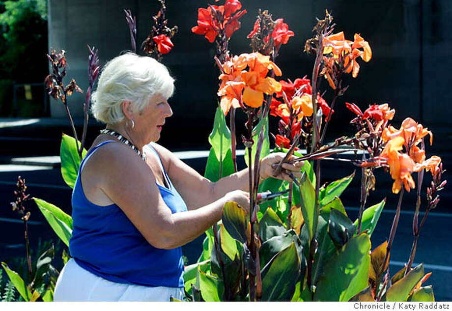 MEDIAN_clement_092_RAD.jpg  SHOWN: Barbara Clement, age 68, pruning and deadheading some of the many canna lilies she planted on the median strip of Park Bl. in Oakland. She waters these and other plants by hand with water from plastic jugs that she fills and carries over to the median strip. Barbara Clement, age 68, wrote in response to a Home & Garden story about volunteers who care for traffic median strips in Oakland. Barbara does this on the median strip on several blocks of Park Blvd. in Oakland, with little help from the city. She weeds, prunes, and with the help of her 91-yr-old pal Charlie Zimmerman, she loads up big plastic bottles of water and hand waters the plants. Photo taken on 7/19/06, in Oakland, CA.  (Katy Raddatz/The S.F.Chronicle)  **Barbara Clement, Charlie Zimmerman Mandatory credit for photographer and the San Francisco Chronicle/ -Mags out Photo: Katy Raddatz