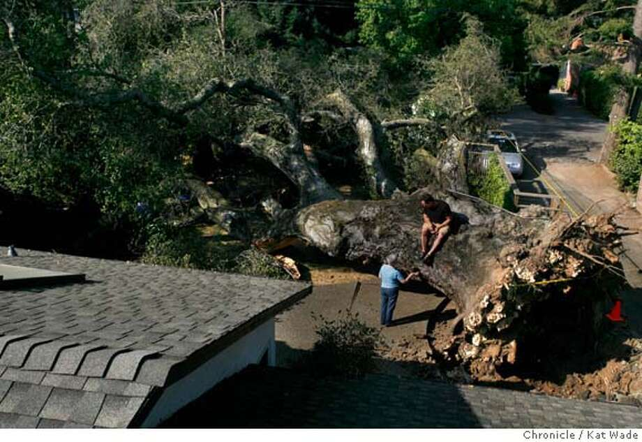 WADEoak_026_KW_.jpg (L to R) On Tuesday July 25, 2006 Maria-Teresa Meconi talks with her son Alex Meconi as they morn the death of a California Coastal Oak Tree, estimated at 500-years-old (the oldest known Oak) that has graced the family's front yard for over 60 years. Besides being a neighborhood icon, the tree has won awards, provided shade, served as a fort house and held a swing for the Meconi family. The old Oak apparently died of old age and fell over this weekend. The 100-foot tall, 9-foot wide tree barely brushed the house and a car as it made its slow and graceful descent.  Kat Wade/The Chronicle ** Maria-Teresa Meconi (Subjects) cq Mandatory Credit for San Francisco Chronicle and photographer, Kat Wade, Mags out Photo: Kat Wade
