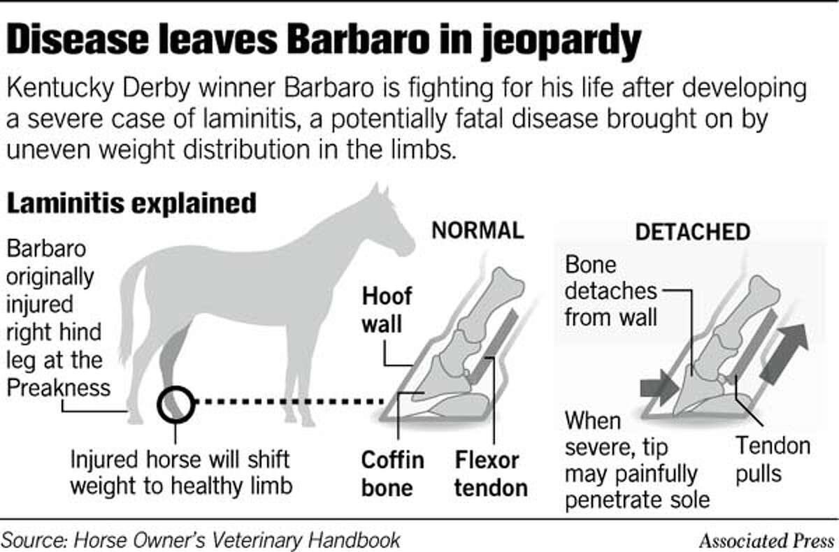 (C9) Barbaro in Jeopardy