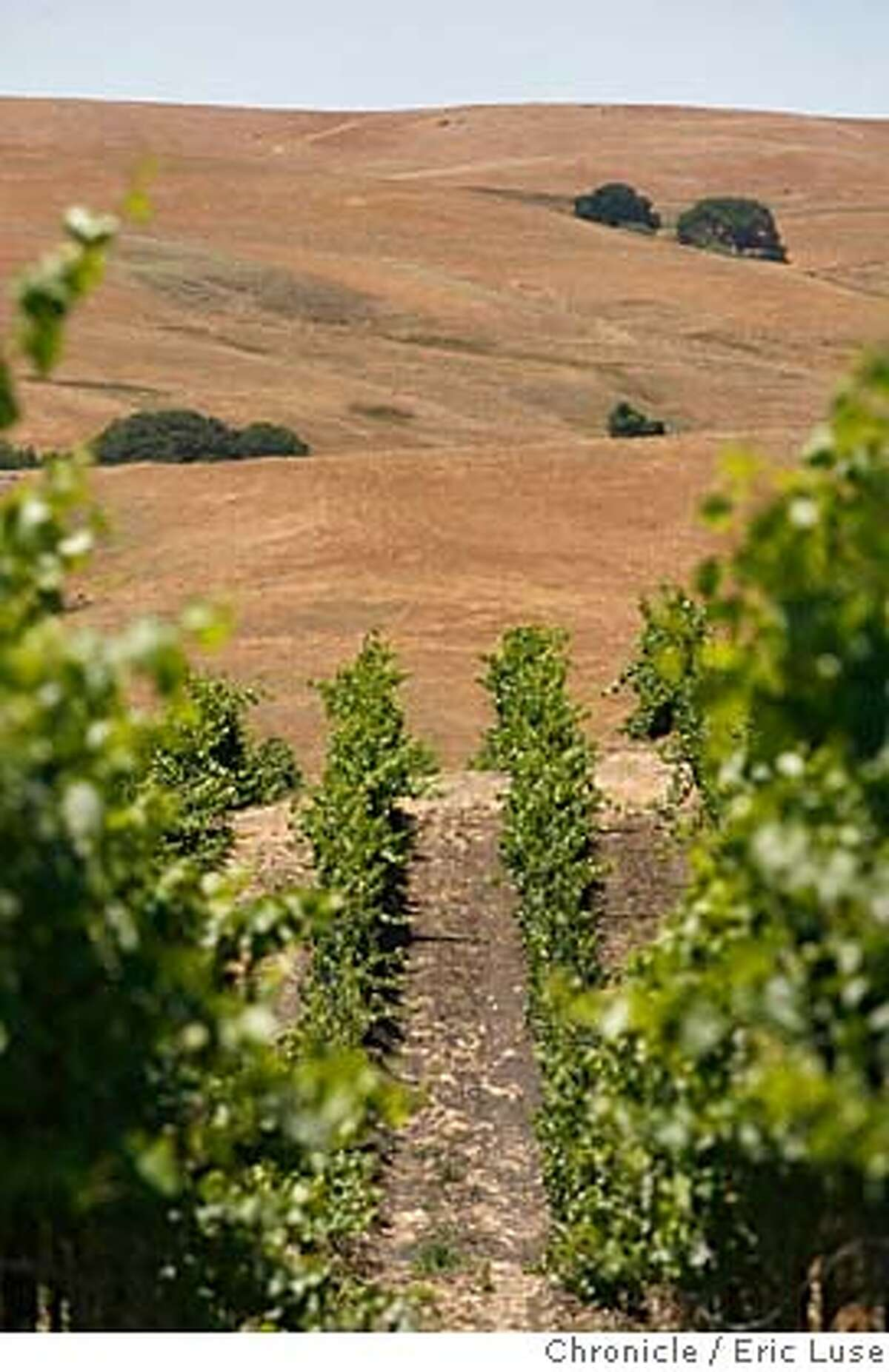 globalwarming115_el.jpg Arid brown hills of dried grass south of Roche Vineyard in Sonoma County. Global warming and it's effect on vineyard's. Photographed in Sonoma Eric Luse/The Chronicle names (cq) from source MANDATORY CREDIT FOR PHOTOG /