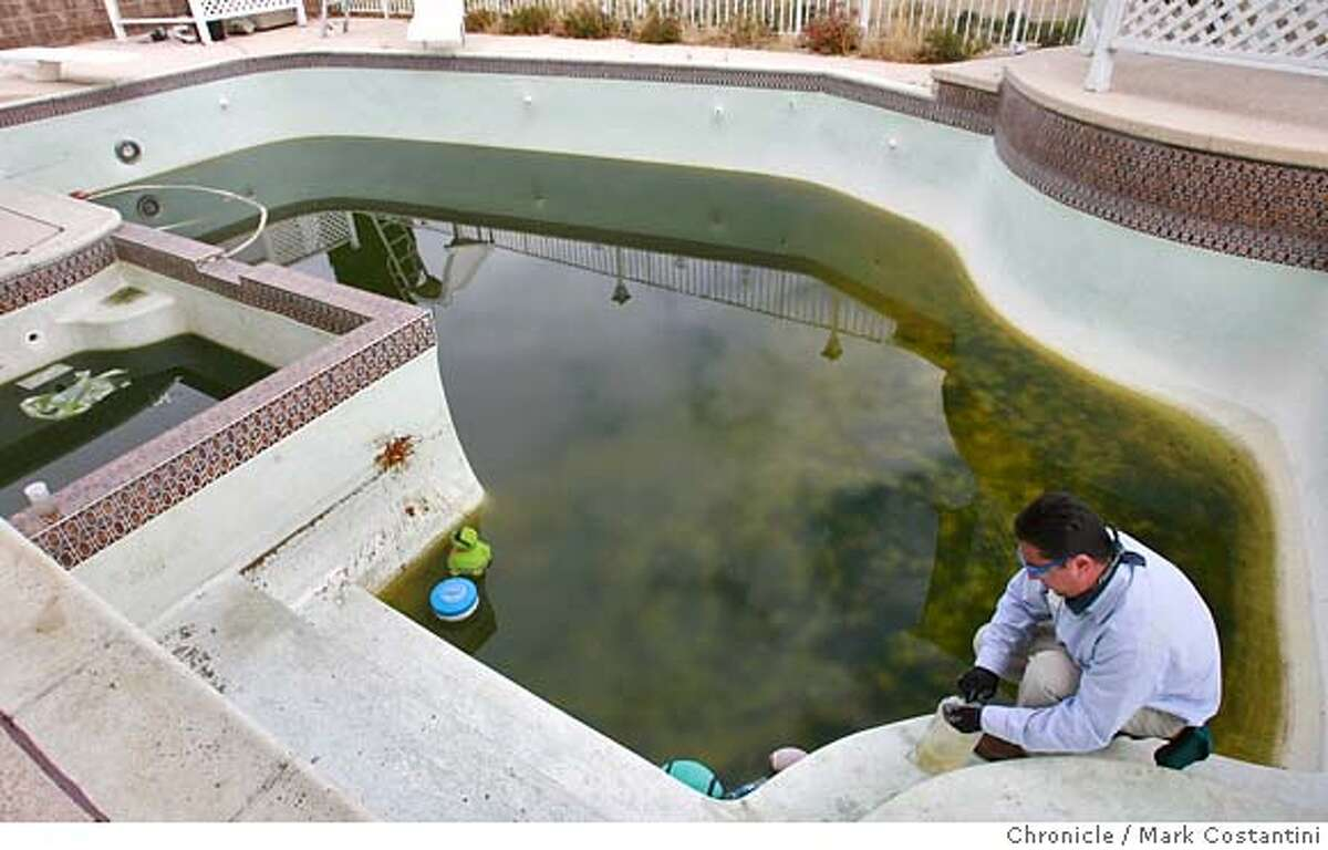 Patrick Vicencio, Vector Control Inspector, Contra Costa Mosquito and Vector Control District inspects a pool at a foreclosed home in Hercules. From the photo Request: The greater number of foreclosed homes in the Bay Area has led to an odd problem: The swimming pools in these ignored properties have become breeding grounds for mosquitoes that can carry the West Nile Virus. Among the counties where this is a problem: Contra Costa, Alameda, and Solano. In Alameda, for example, the mosquito vector agency gets about three calls a day about abandoned swimming pools. Likewise Contra Costa. On Thursday, October 18, at 10 a.m., the Chronicle is tagging along as the Contra Costa Vector control district (yes, its real name) visits one of those swimming pools for the fifth time. The pool belongs to a house that's been foreclosed. The vector agency will be dropping special fish into the pool. These fish apparently like to eat the mosquito larvae that lives in swimminng pools. PHOTO: Mark Costantini / The Chronicle