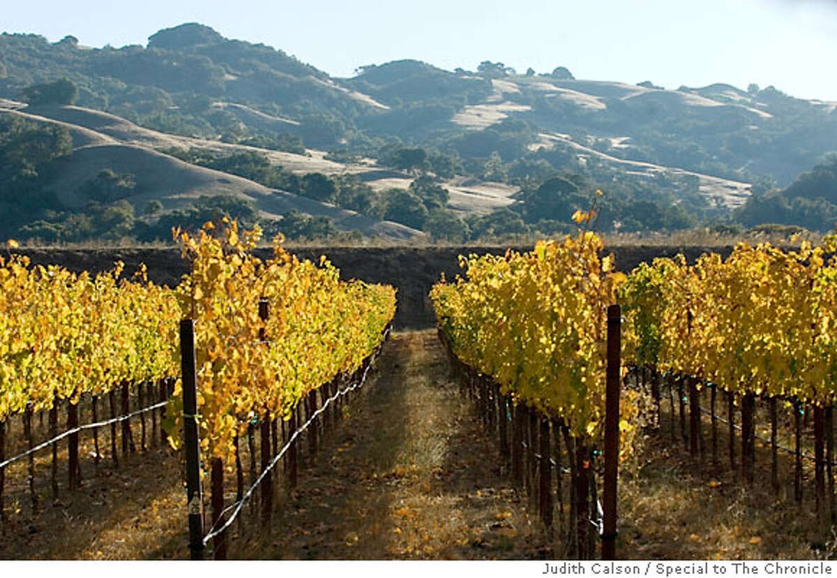Vineyards on Highway 128 in the Anderson Valley outside of Boonville, California on Monday, October 8, 2007. TRAVEL SECTION/CALIFORNIA & THE WEST. by judith calson/special to the chronicle