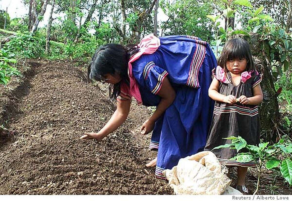 GUAYMI INDIAN MOTHER AND DAUGHTER PLANT COFFEE IN PANAMA
