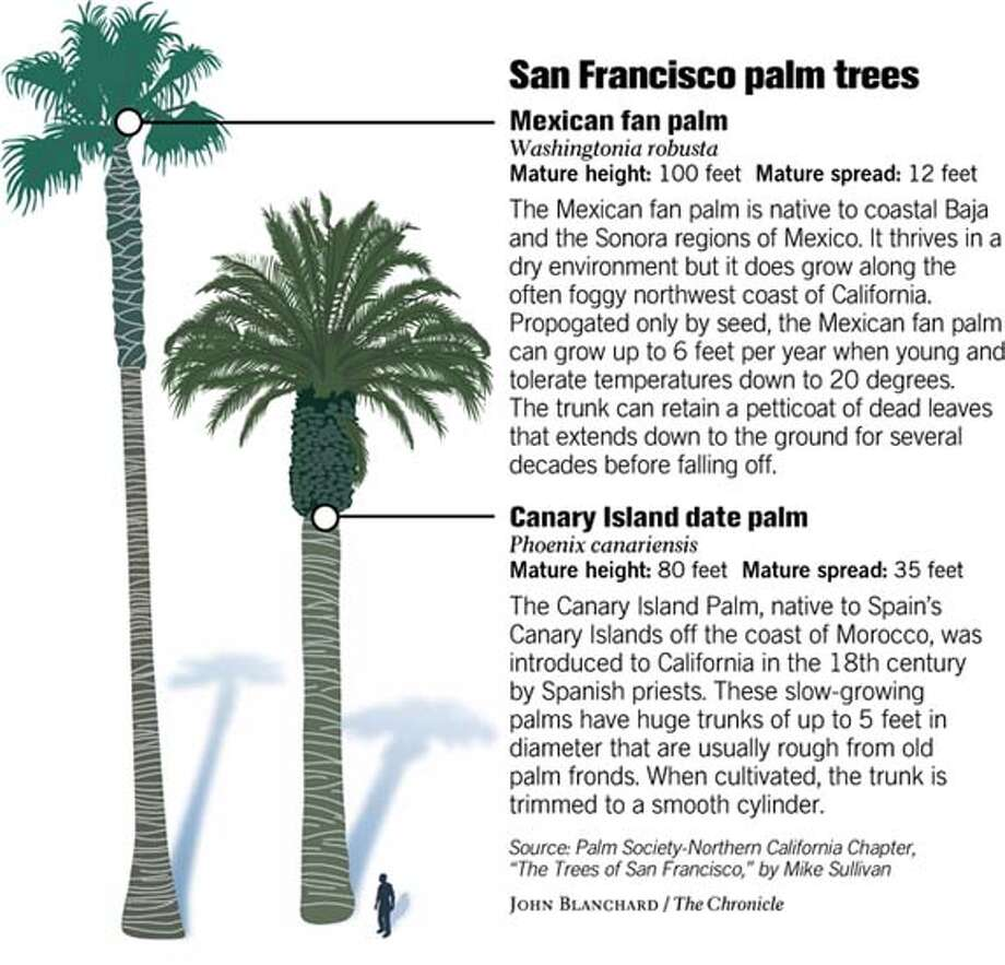 PALMS POP UP ALL OVER S.F. / Since the 1989 earthquake, the city has spent  $1.9 million on trees that evoke Los Angeles to boost tourism and combat  urban ...