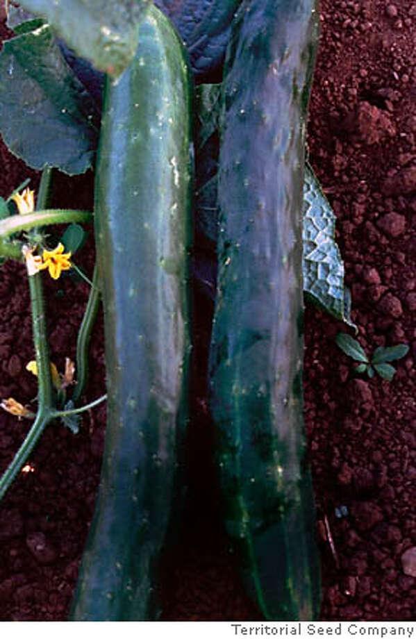 - Photo: Territorial Seed Company
