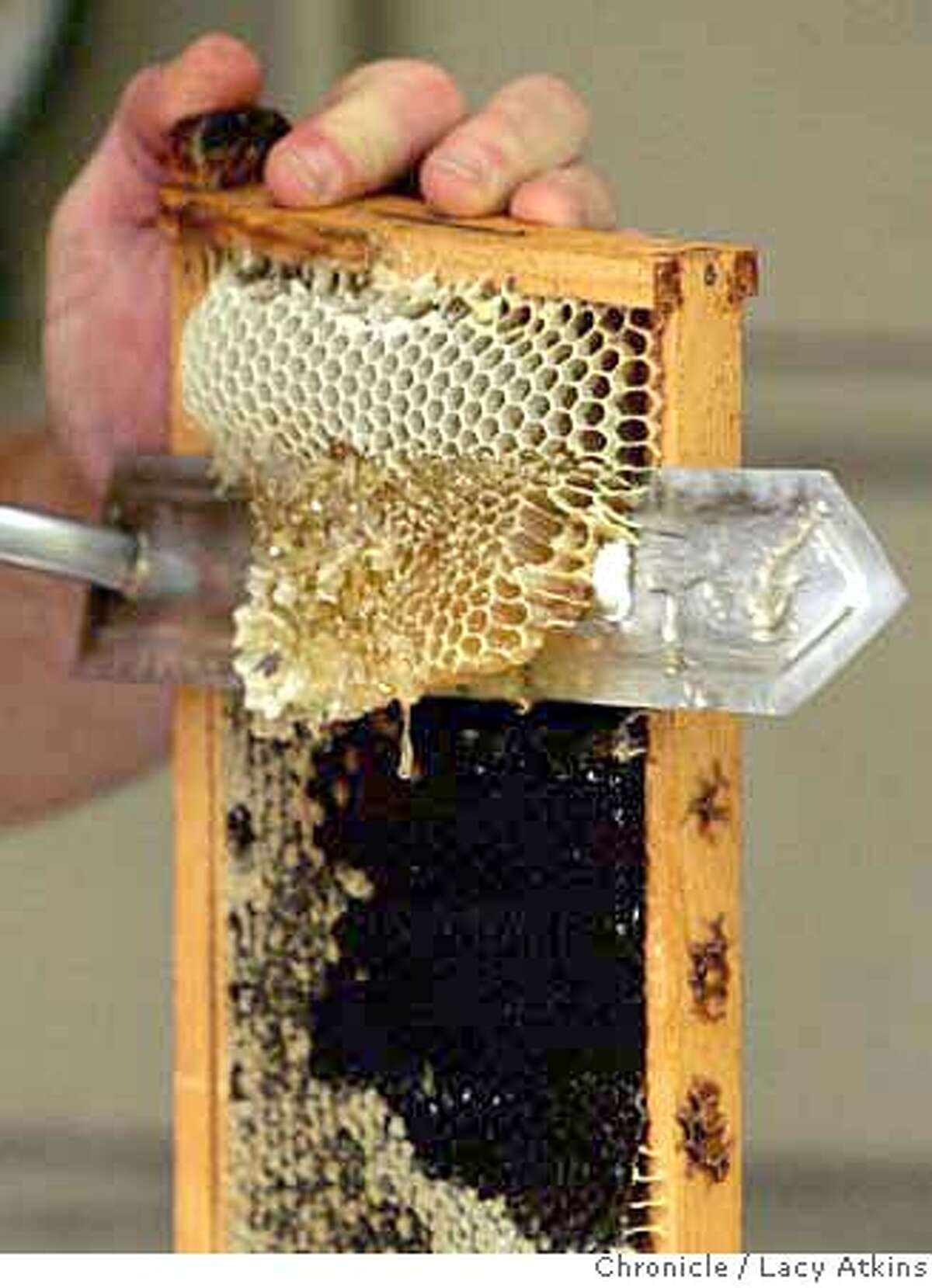 Byron Waibel uses a hot knife to cut the caps off the honey comb on the frame if the process of extraction from his bee colony, Friday Sept. 29, 2007 in San Francisco, Ca. Lacy Atkins / The Chronicle Photo taken on 9/28/07, in San Francisco, CA, USA MANDATORY CREDIT FOR PHOTOG AND SAN FRANCISCO CHRONICLE/NO SALES-MAGS OUT