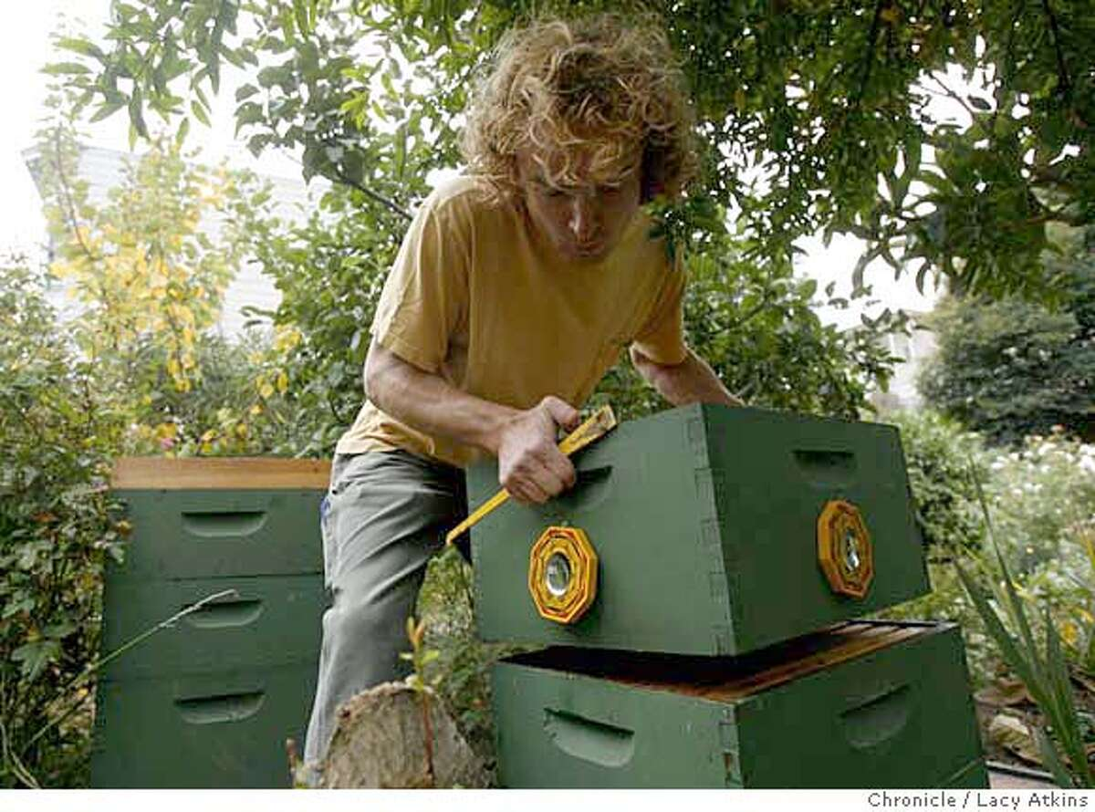 Byron Waibel pulls the supers apart as he divides his hive to take them to extract the honey from his thousands of bees that he keeps at a Howard-Langton Community Garden, Friday Sept. 29, 2007 in San Francisco, Ca. Lacy Atkins / The Chronicle Photo taken on 9/27/07, in San Francisco, CA, USA MANDATORY CREDIT FOR PHOTOG AND SAN FRANCISCO CHRONICLE/NO SALES-MAGS OUT