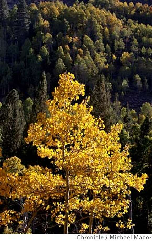 fallfoliage_081_mac.jpg Lundy Canyon turns to the fall season with brilliant colors. North of Lee Vining, Ca. on the Eastern Slopes of the Sierra Nevada Mountain Range..Photographed in, Lee Vining, Ca, on 9/28/07. Photo by: Michael Macor/ The Chronicle Mandatory credit for Photographer and San Francisco Chronicle No sales/ Magazines Out Photo: Michael Macor
