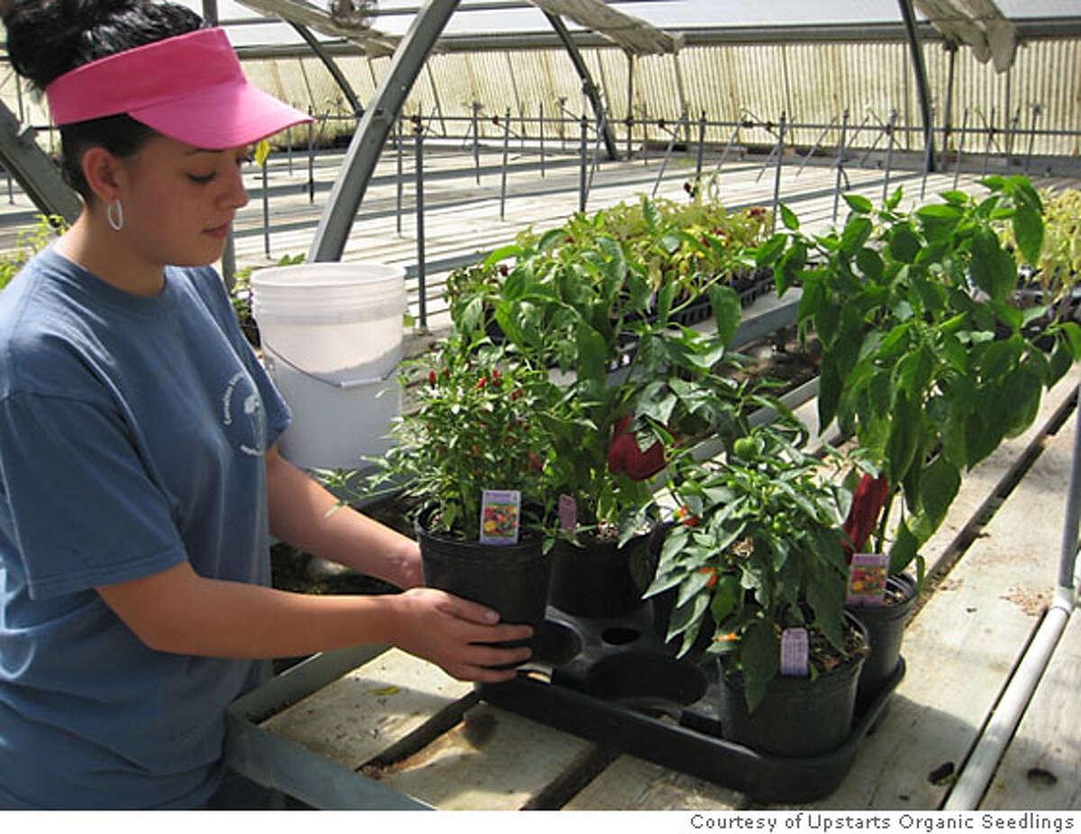 Upstarts Organic Seedlings