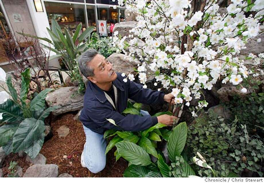 cherryblossom15_012_cs.jpg Event on 4/14/06 in San Francisco.  Richard Hashimoto, 47, co-chair of the festival, adjusts a cherry blossom display in the Kintetsu Mall of Japantown. Preparations continue in San Francisco's Nihonmachi, otherwise known as Japantown, for the 39th annual Northern California Cherry Blossom Festival. The festival will take place over the next two weekends.  Chris Stewart / The Chronicle MANDATORY CREDIT FOR PHOTOG AND SF CHRONICLE/ -MAGS OUT Photo: Chris Stewart