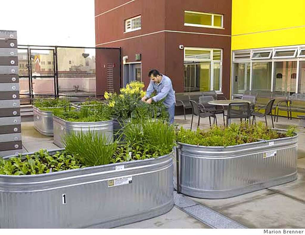 Bay area landscape architects - Curran House Resident Works On His Overflowing Plot Of Broccoli And Kale He Says Gardening