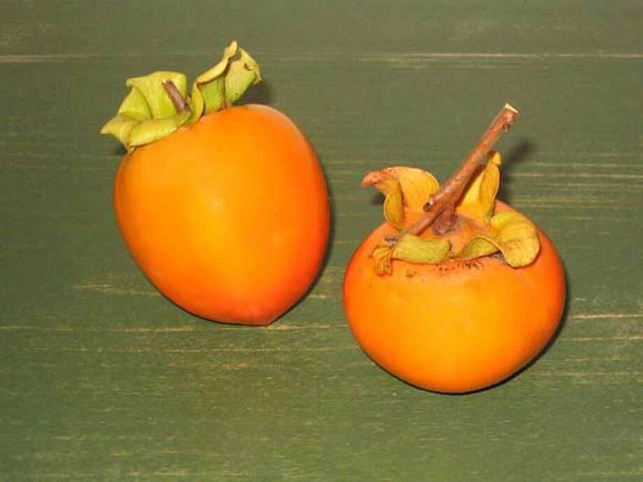 Photo of the Hachiya and Fuyu persimmons. Photo: .