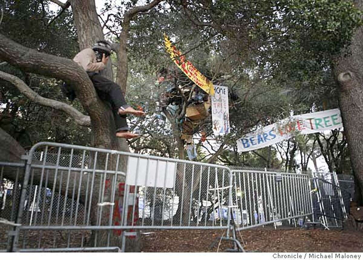 A masked and unidentified tree sitter supporter perched himself on a tree just outside the fence surrounding the tree sitters. An Alameda County judge ordered the tree sitters of Berkeley today to climb down from their perches or face five days in jail. Superior Court Judge Richard Keller granted a preliminary injunction requested by the UC Berkeley administration against the protesters, who are battling the university's plans to remove a grove of trees next to Memorial Stadium to build an athletic center. Photo by Michael Maloney / San Francisco Chronicle MANDATORY CREDIT FOR PHOTOG AND SF CHRONICLE/NO SALES-MAGS OUT