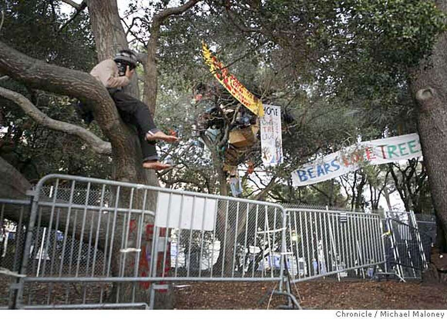 A masked and unidentified tree sitter supporter perched himself on a tree just outside the fence surrounding the tree sitters.  An Alameda County judge ordered the tree sitters of Berkeley today to climb down from their perches or face five days in jail.  Superior Court Judge Richard Keller granted a preliminary injunction requested by the UC Berkeley administration against the protesters, who are battling the university's plans to remove a grove of trees next to Memorial Stadium to build an athletic center.  Photo by Michael Maloney / San Francisco Chronicle MANDATORY CREDIT FOR PHOTOG AND SF CHRONICLE/NO SALES-MAGS OUT Photo: Michael Maloney
