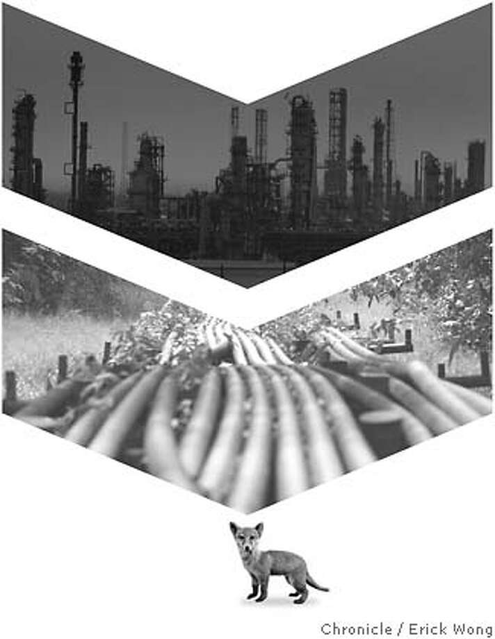 Photo illustration: Erick Wong / SFC TOP IMAGE: The sun sets over an oil refinery in Port Arthur, Texas, in this May 17, 2007 file photo. Refineries gobble lots of power in Texas, the leading state in emitting greenhouse gas. (AP Photo/LM Otero) MIDDLE IMAGE: Local youths walk on oil pipeline in Utorogun, Nigeria, Sunday, March 5, 2006. Armed militants in Nigeria vowed Sunday to cut daily oil exports from this West African nation's troubled delta region by another 1 million barrels by the end of March, as OPEC nations prepared for a strategy meeting in Vienna this week. A wave of militant assaults on pipelines and oil facilities has already cut production by 455,000 barrels per day in Nigeria, which normally exports 2.5 million barrels of crude daily. (AP Photo/George Osodi) BOTTOM IMAGE: Young fox (absolutvision.com) Photo: Photo Illustration: Erick Wong
