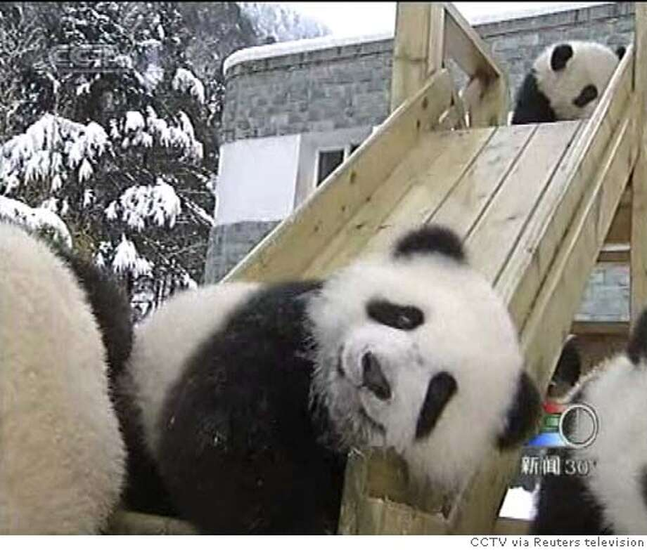 A video image shows baby pandas at a slide in a specially-built playground in Wolong, in China's southwestern Sichuan province, March 10, 2006. The playground, which was set up by the Research Centre of Panda Protection of China after the pandas were weaned, is used by 16 baby pandas. CHINA OUT NO ONLINES NO ARCHIVES REUTERS/CCTV via Reuters television 0 Photo: CCTV