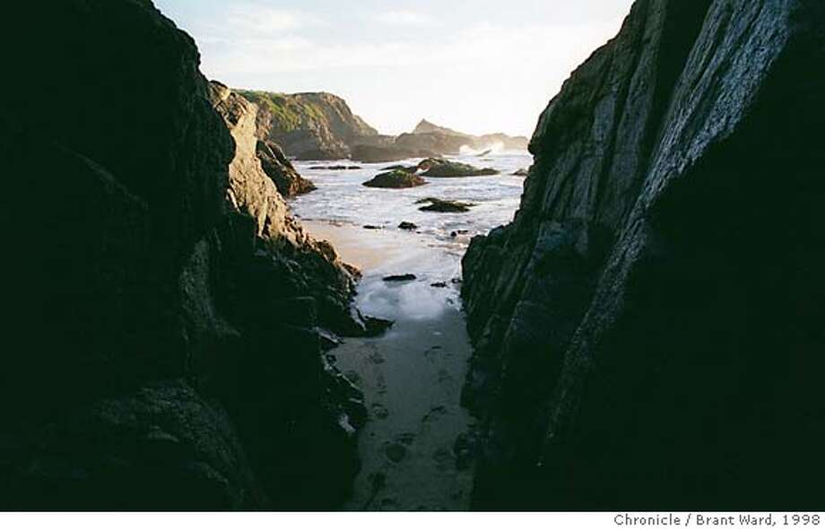 MUSSELS3/17NOV98/FD/BW--The Pacific coast near Bodega Bay is a favorite growing area for the wild mussels. Many cling to the rocks and narrow rock passages that line the area. By Brant Ward/Chronicle Photo: BRANT WARD