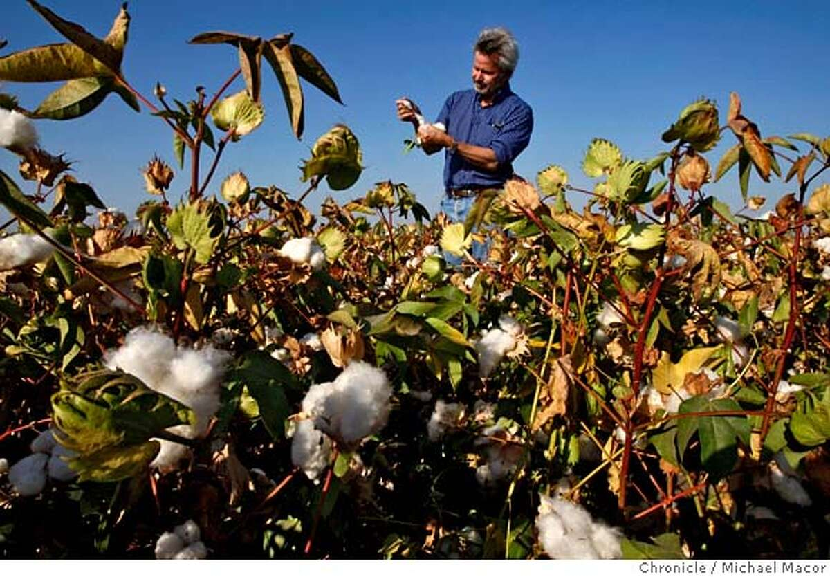 farmbill_135_mac.jpg Bowles in one of his fields full of cotton plants that are near ready for harvest. The company has 6,000 acres of cotton. Philip Bowles is President of Bowles Farming Company in Los Banos. Congress is working on a farm bill that will have a dramatic impact on the way farming is conducted in California. One of the issues at hand is subsidies for California farmers. Photographed in, Los Banos, Ca, on 9/11/07. Photo by: Michael Macor/ The Chronicle Mandatory credit for Photographer and San Francisco Chronicle No sales/ Magazines Out