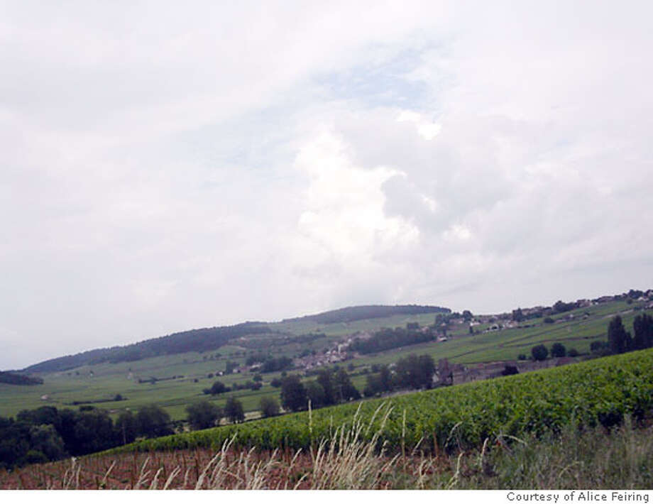 Vineyards in the Auxey-Duresses wine region of Burgundy, France. Photo: HO