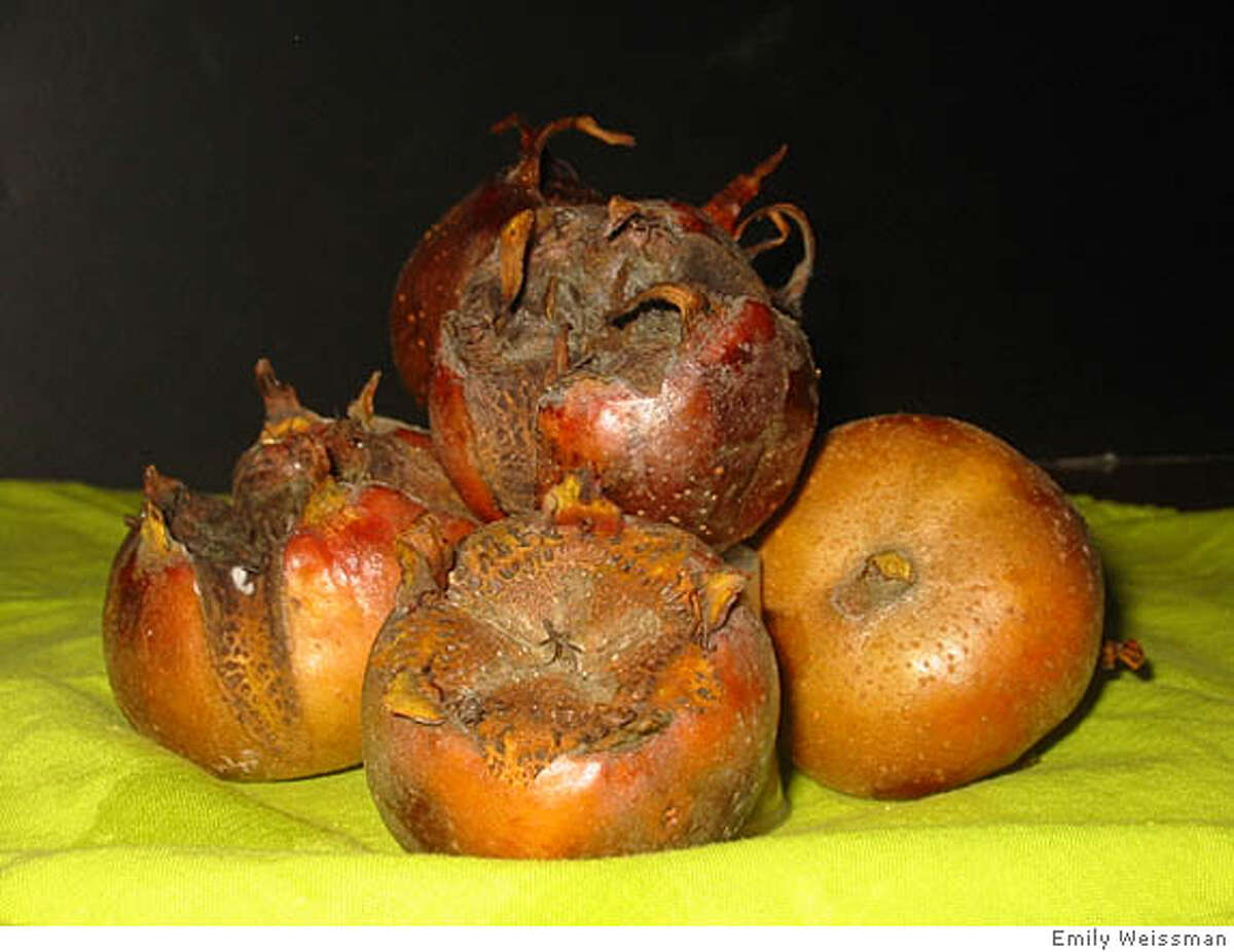 Medlar is a fruit to be eaten only after ripening. It shouldn't be tasted until it has bletted, or become nearly squishy, and the pulp has achieved the taste and feel of fruit butter. Photo by Emily Weissman