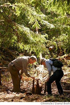 Redwood Auto Sales >> BERKELEY / Big tree ambitions / Volunteers try to reforest ...