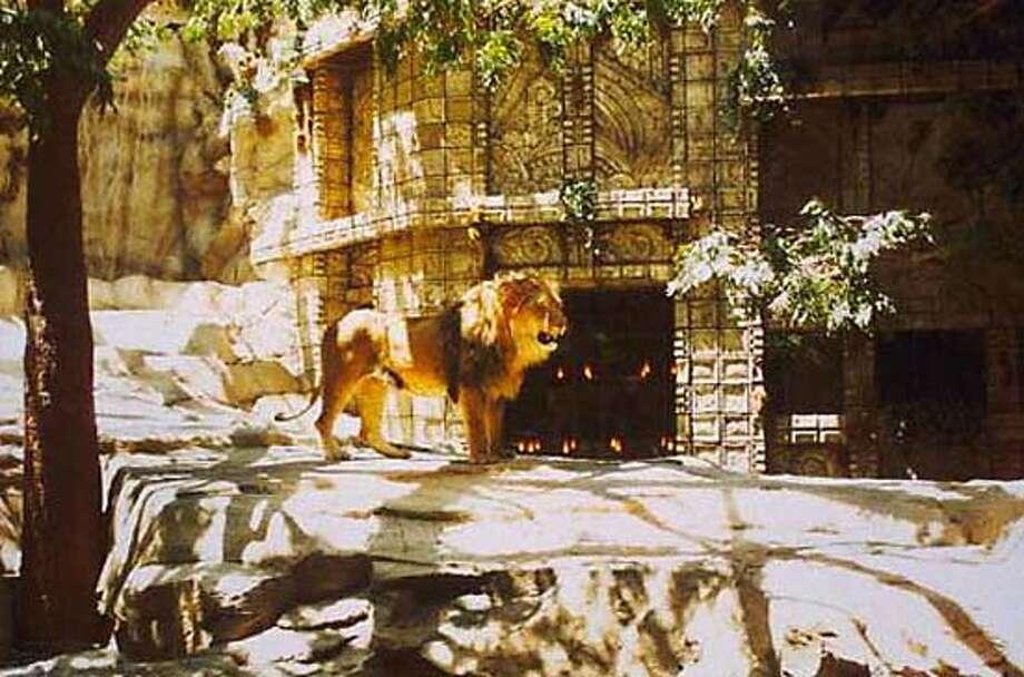 The MGM Grand's lion habitat. Photo courtesy mgmgrand.com
