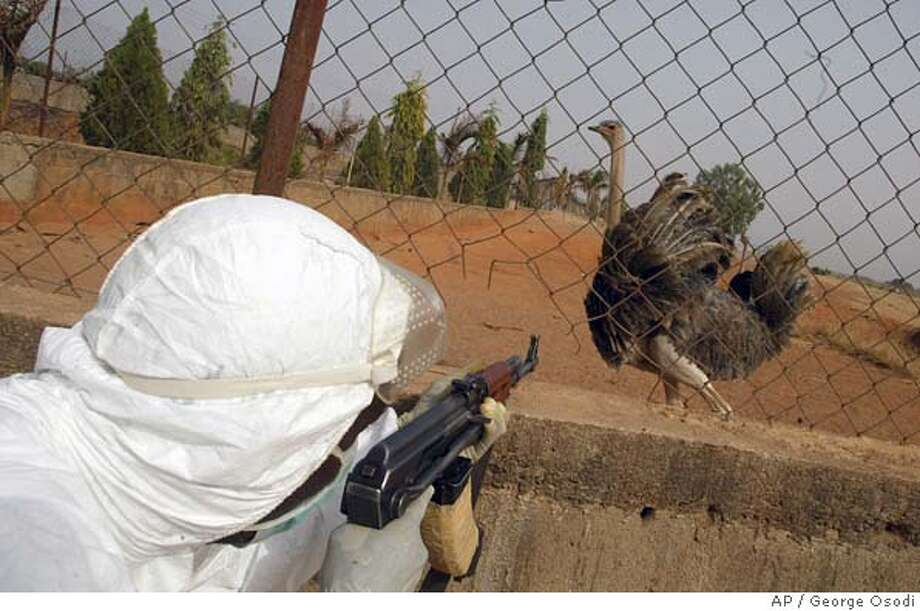 A policeman takes aim to kill an ostritch suspected of having bird flu virus inside the Sambawa farms where the Nigerian first bird flu case was noticed in Jaji about 40km from Kaduna, Nigeria, Friday, Feb. 10, 2006. Nigerian poultry farmers said Friday the government was not proposing enough compensation for those whose flocks have been hit by Africa's first known outbreak of a deadly bird flu strain. (AP Photo/George Osodi) Photo: GEORGE OSODI