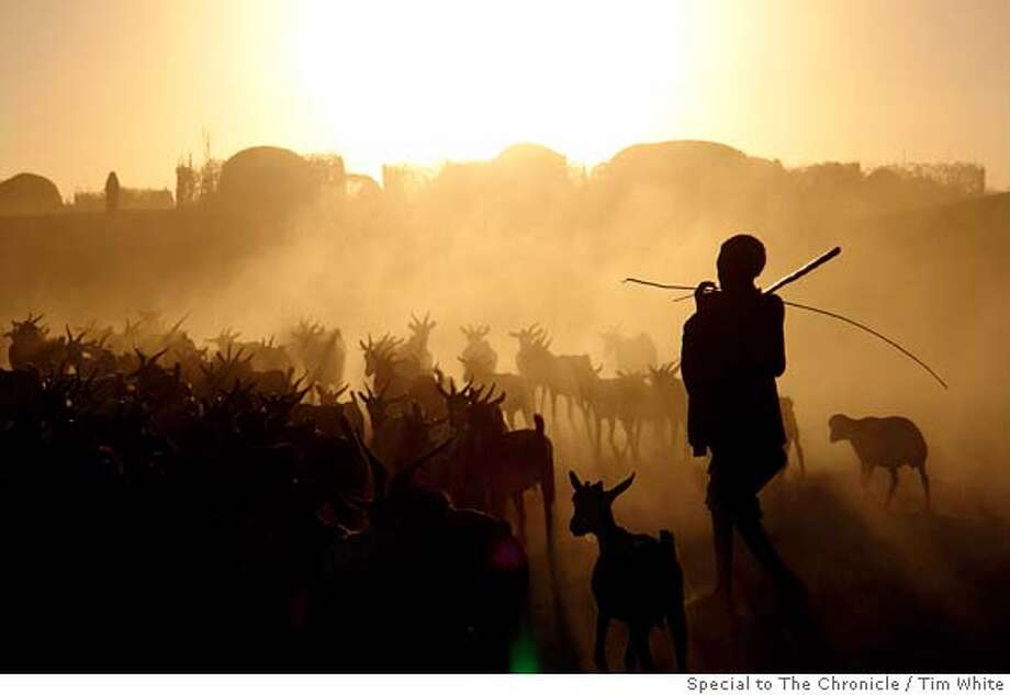 fossils19 A herder brings his foraging goats back to the Afar village of Herto in December 2005 Photo: Tim White