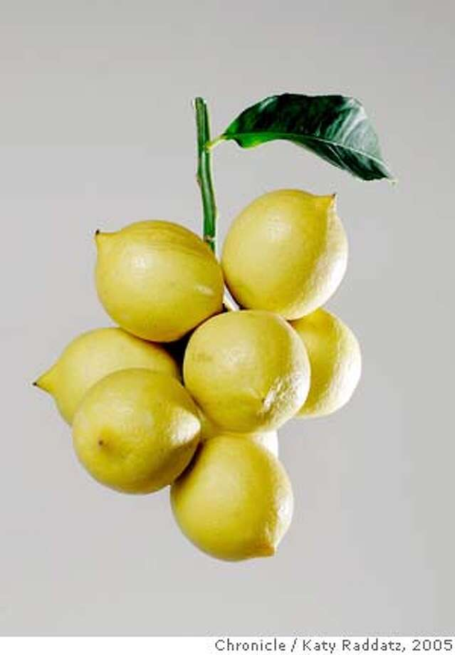 A lovely branch of Meyer lemons from the garden of Jim and Terry Nagel of Burlingame. Shirley-Anne Owden writes for Home and Garden. Photo taken on 12/1/05, in San Francisco, CA.  By Katy Raddatz / The San Francisco Chronicle Photo: Katy Raddatz