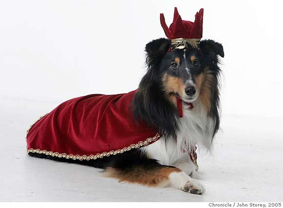 """""""Jack"""" dressed as a king owned by Trish Madden. Portraits of dogs in Halloween costumes.  John Storey San Francisco Event on 10/21/05 Photo: John Storey"""