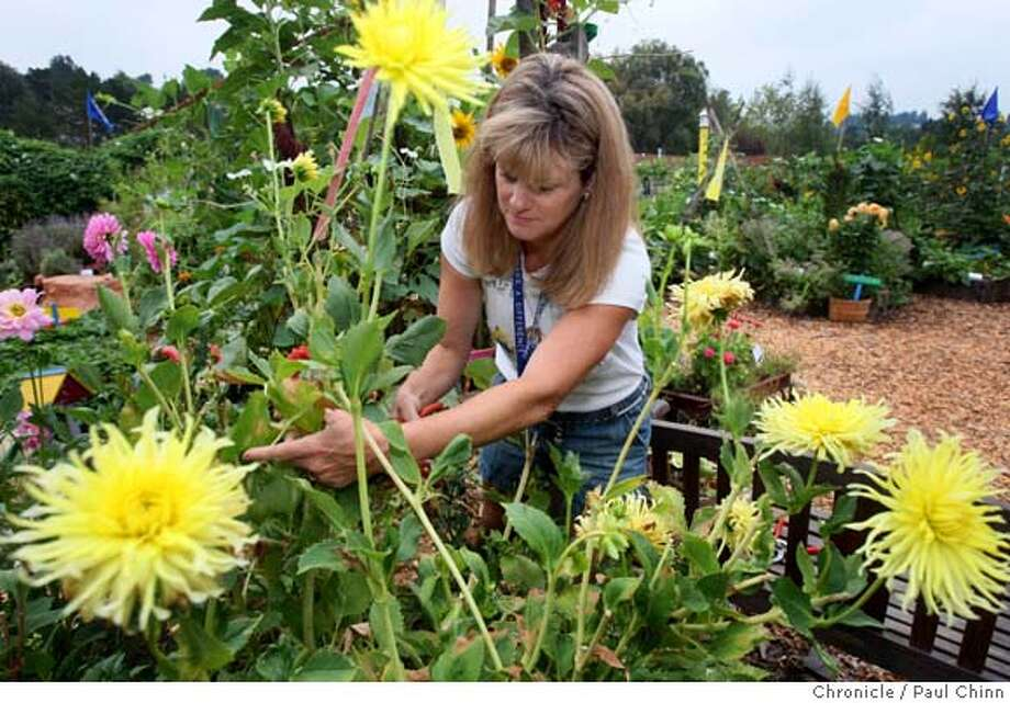Monette Meo works in the Garden of Learning at St. Perpetua Catholic School in Lafayette, Calif. on Friday, Sept. 7, 2007.  PAUL CHINN/The Chronicle  **Monette Meo MANDATORY CREDIT FOR PHOTOGRAPHER AND S.F. CHRONICLE/NO SALES - MAGS OUT Photo: PAUL CHINN