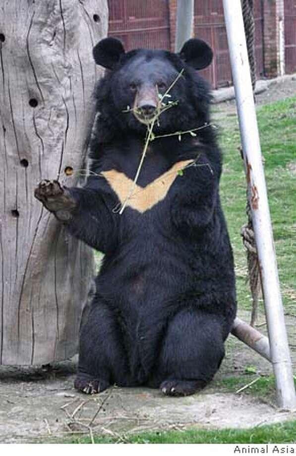 Bears wang ridden raw