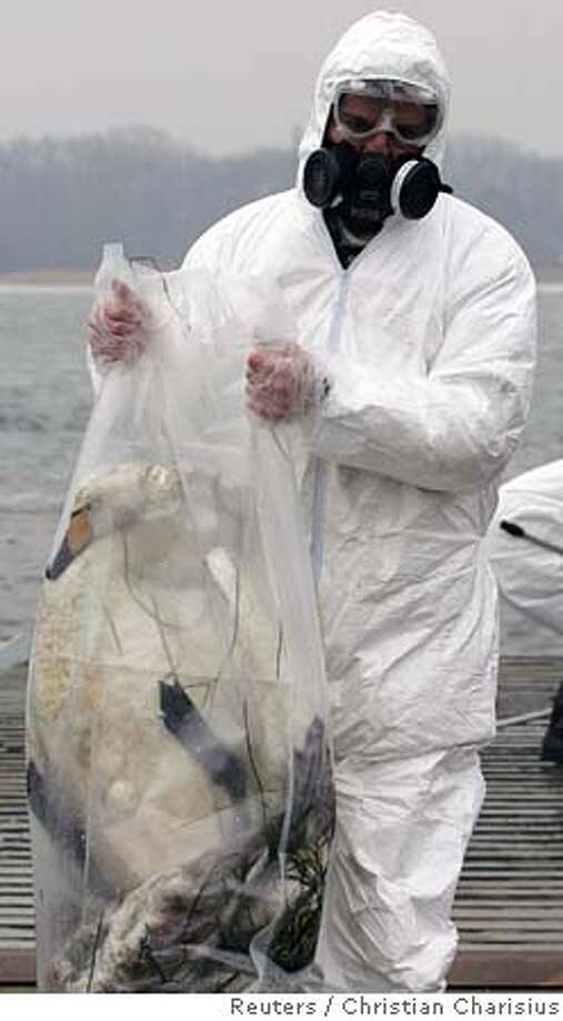 A veterenarian in protective clothes carries a dead swan in a plastic bag at the 'Wittower Faehre' in the Baltic island of Ruegen February 15, 2006. Germany said on Wednesday further tests had confirmed Tuesday's preliminary finding that two dead swans found on a Baltic Sea beach were infected with the deadly H5N1 strain of bird flu. REUTERS/Christian CharisiusRan on: 02-16-2006  A veterinarian in protective clothing carries a dead swan found on a Baltic Sea island. Photo: CHRISTIAN CHARISIUS