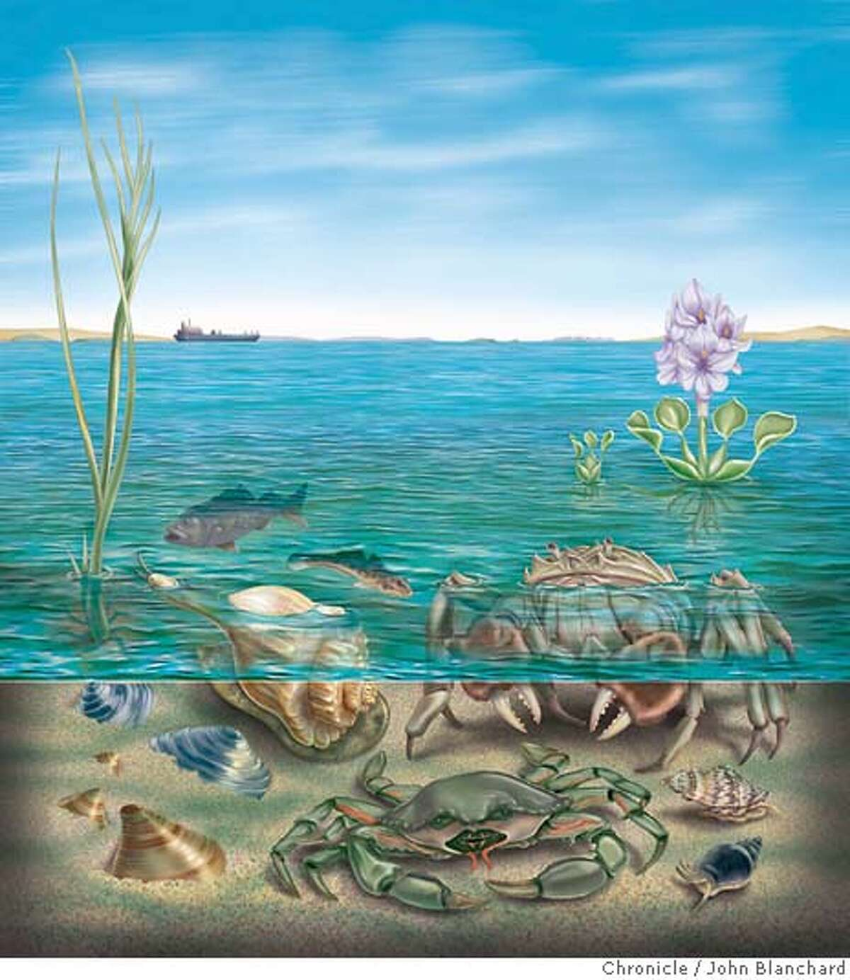 A new ecosystem is evolving in San Francisco Bay. We have no idea what it is, or where it�s going. (illustration by John Blanchard)