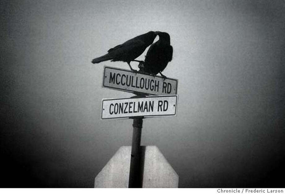 {object name} Two black birds meet at the same corner and share the same sign in the fog up in the Marin Headlands.  2/4/06  Frederic Larson Photo: Frederic Larson