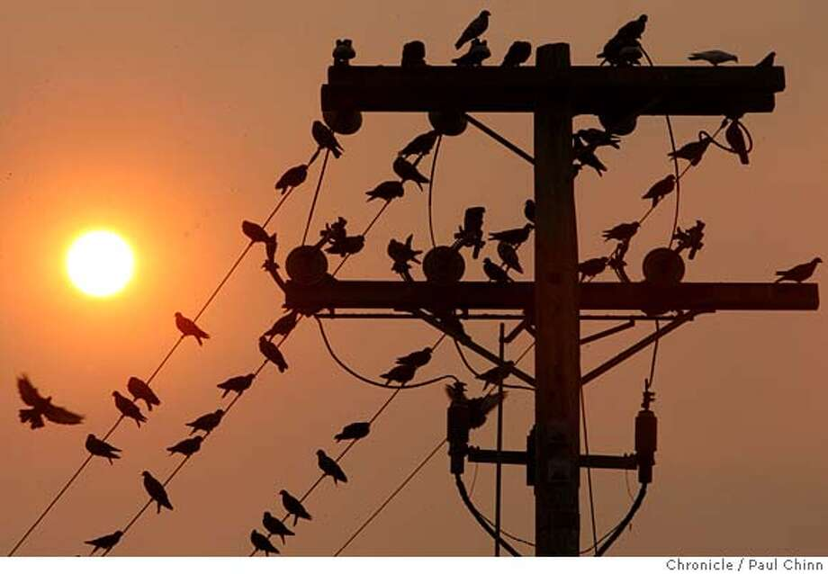 A flock of pigeons bask under an unusually red sunrise in Berkeley, Calif. on Thursday, Sept. 6, 2007. Smoke from a forest fire in southern Santa Clara County is drifting across the Bay Area creating the reddish hue.  PAUL CHINN/The Chronicle Photo: PAUL CHINN