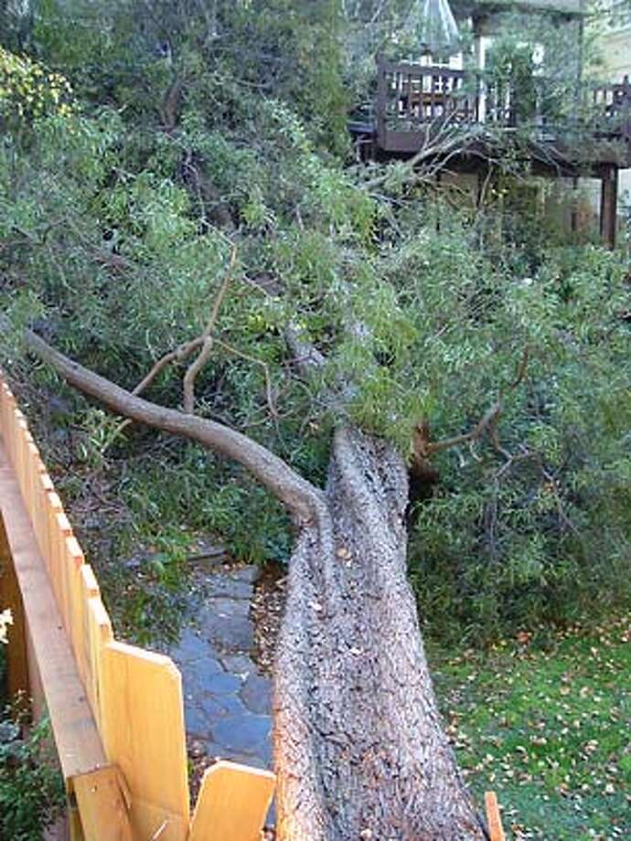 Other casualty landscape damage caused by tree failure may qualify for a tax adjustment.