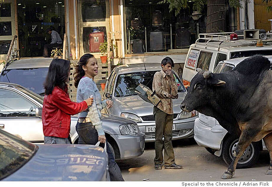 A bull lumbers along a Delhi street. Photo: Adrian Fisk / Special To The Chr