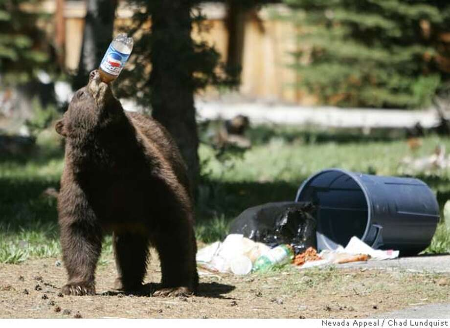 A black bear takes a drink from a plastic soda bottle after trash from Memorial Day weekend was left out for pick-up on Tuesday, May 29, 2007, near South Lake Tahoe, Calif. (AP Photo/Nevada Appeal, Chad Lundquist) ** MAGS OUT, NO SALES ** Ran on: 05-30-2007  A black bear chugs down some soda Tuesday after going through Memorial Day weekend garbage left out for trash pickup near South Lake Tahoe. Will the bruin recycle the plastic bottle?  Ran on: 05-30-2007 Ran on: 05-30-2007 MAGS OUT, NO SALES, STAND ALONE PHOTO Photo: Chad Lundquist