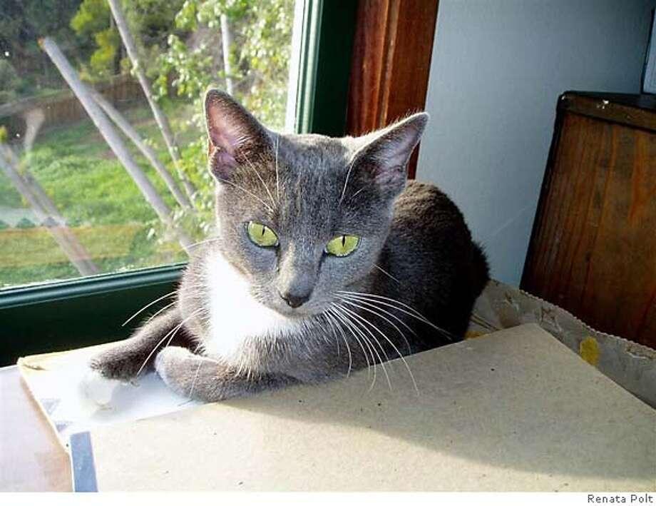 Taken by Renata Polt of her cat Sasha.  OLYMPUS DIGITAL CAMERA Photo: Renata Polt