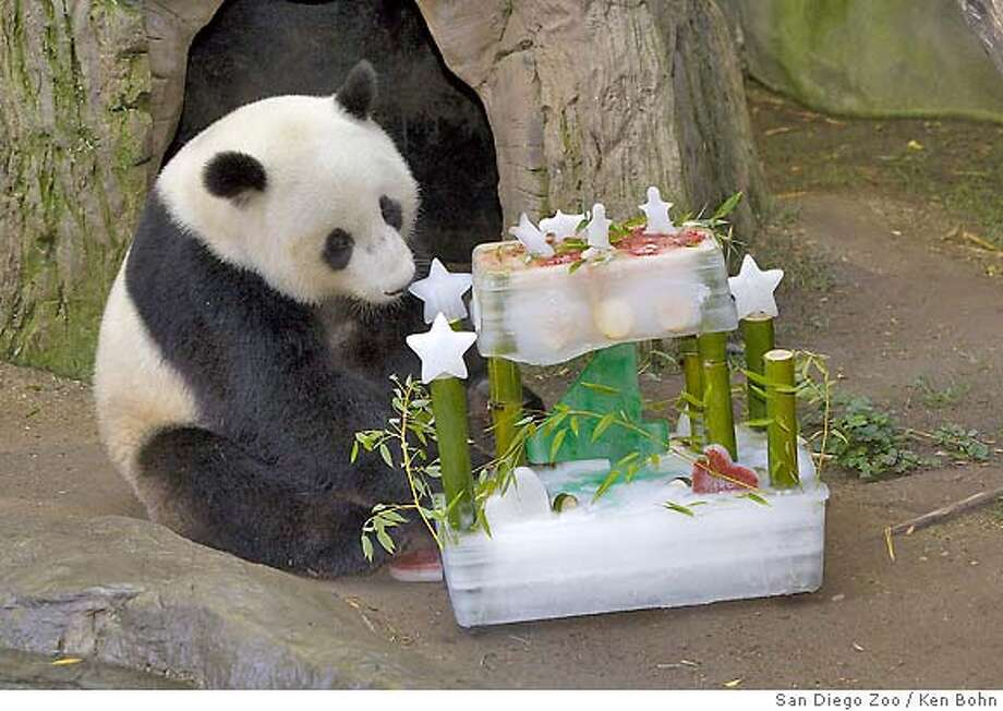 In this photo released by the San Diego Zoo, Giant panda Mei Sheng enjoys an ice birthday cake made with apples and yams at the San Diego Zoo, Sunday, Aug. 19, 2007. Guests will be able to see him at the Zoos Giant Panda Research Station up until October, when the male panda will board a plane and make a new home in the Peoples Republic of China. Born in August 2003, Mei Sheng will become only the second giant panda to be born outside of the China and sent to its native homeland as part of an international collaboration to save this endangered species. (AP Photo/San Diego Zoo, Ken Bohn) ** NO SALES** Photo: Ken Bohn